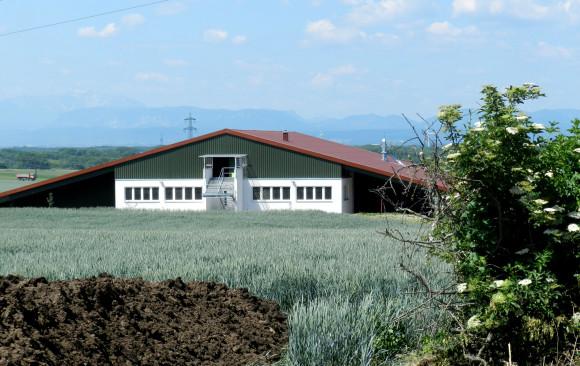 Neubau einer Multifunktionshalle (Aussiedlerhof)